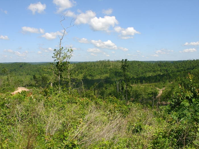 20.9 acres of Residential Land for sale. Antler Ridge Tract 25, Mountain View, MO